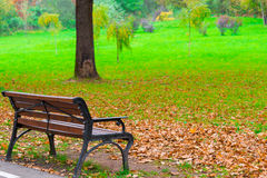 Fallen leaves on a lawn in autumn park Royalty Free Stock Photography