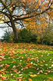 Fallen leaves on a lawn Stock Photo