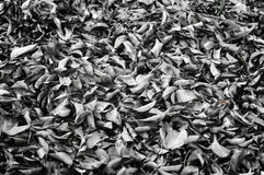 Fallen leaves laying on the ground. Royalty Free Stock Images