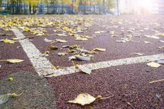 Fallen, leaves lie on the artificial surface of the sports ground with markings, against the background of the stands. Stock Image