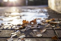 Fallen leaves lie on a stone pavement in the sun, on a blurred b Royalty Free Stock Photography