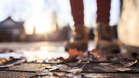 Fallen leaves lie on a stone pavement in the sun, on a blurred b Royalty Free Stock Photos