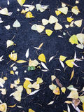 Fallen leaves lying on the pavement. Fallen leaves lie on the wet pavement, cloudy day in autumn Royalty Free Stock Photography