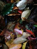 Fallen leaves lying on wet ground Stock Images