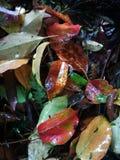 Fallen leaves lying on wet ground Stock Photo