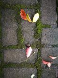Fallen leaves lying on wet ground Royalty Free Stock Photos