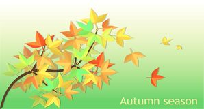 fallen leaves Mable vector Stock Image