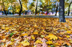 Fallen leaves of a maple dense layer lay on the green grass in t stock image