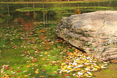 Fallen leaves in Notch Lake. In Fall: Catskill Mountain State Park, New York Stock Photo