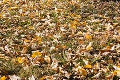 Fallen Leaves Orange Ground Grass Autumn Fall Season Stock Images