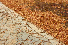 Fallen leaves in park Stock Photos