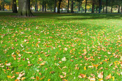 Fallen leaves in a park Royalty Free Stock Photo