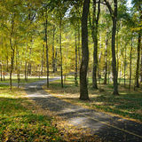 Fallen leaves in park Royalty Free Stock Photography