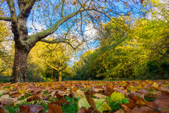 Fallen leaves in a park in autumn Royalty Free Stock Image