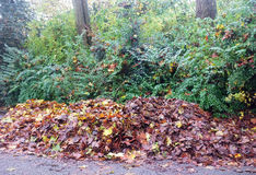 Fallen leaves in the park Royalty Free Stock Image