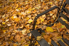 Fallen leaves in a park. Covering the ground, fallen on black metal bench Royalty Free Stock Photos