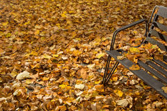 Fallen leaves in a park. Fallen leaves covering ground, yellow, beige, brown, black metal bench Stock Photography