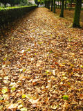 Fallen leaves path Stock Photos