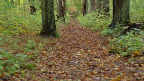 Fallen leaves. Path in the forest of fallen leaves stock footage