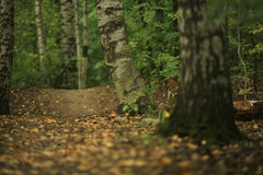 Fallen leaves on path Royalty Free Stock Images