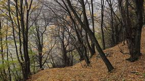 Fallen Leaves on Path stock footage