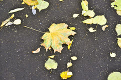 Fallen leaves on the pavement. Stock Images
