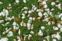 Fallen leaves and petals background Stock Photo