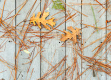 Fallen Leaves and Pine Needles Royalty Free Stock Photography