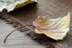 Fallen Leaves of Poplar Tree. Placed on a straw mat Stock Photo