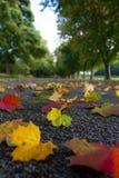 Fallen Leaves On Quiet Lane Stock Photo