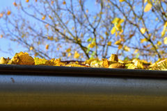 Fallen leaves in the rain gutter to autumn. Stock Photo