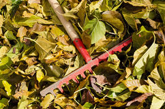 Fallen Leaves with Rake Stock Photos