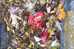 Fallen leaves. Red and yellow leaves in a gutter royalty free stock images