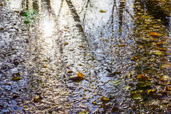 Fallen Leaves and Reflection of Trees on Water Stock Photography