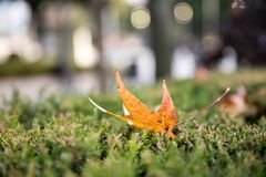 Fallen leaves. Return to the roots Stock Photo