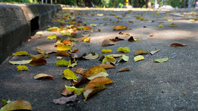 Fallen leaves on the road Royalty Free Stock Photos