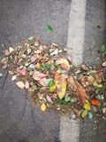 Fallen leaves. On the road Royalty Free Stock Images