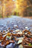 Fallen leaves on the road. Closeup of colorful fallen leaves on the road Stock Images