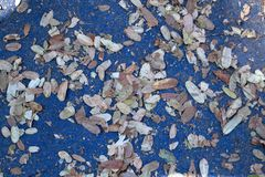 Fall leaves on blue background stock photo