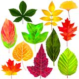 Fallen leaves set in low poly style. Tree fallen leaf set colorful low poly designs isolated on white background. Vector autumn botanical illustration vector illustration