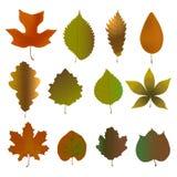 Fallen leaves set. Vector illustration of herbarium Stock Photo