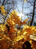 Fallen leaves in several colors decorates the forest landscape. In the surrounding forest in autumn days spectrum of colors on a sunny day, in the autumn in the stock photo