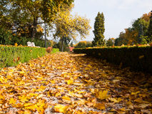 Fallen leaves on a sidewalk Stock Images