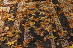 Fallen leaves on the sidewalk stock image