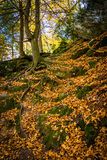 Fallen leaves on a steep hillside on a trail in Gunpowder Falls Royalty Free Stock Photography