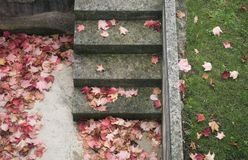Fallen leaves on steps Stock Images