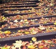 Fallen leaves on steps Stock Image