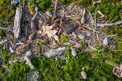 Fallen leaves, sticks  and pine cones on the floor of a forest f Stock Photos