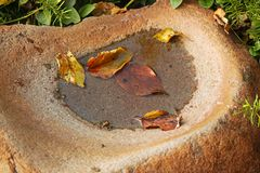 FALLEN LEAVES IN A STONE BIRDBATH. Fallen leaves in a puddle of water in a hollow grinding stone used as a birdbath Stock Images