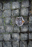 Fallen leaves on the stones in hoarfrost Royalty Free Stock Image